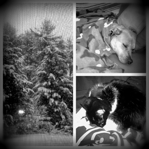 Winter Day B&W